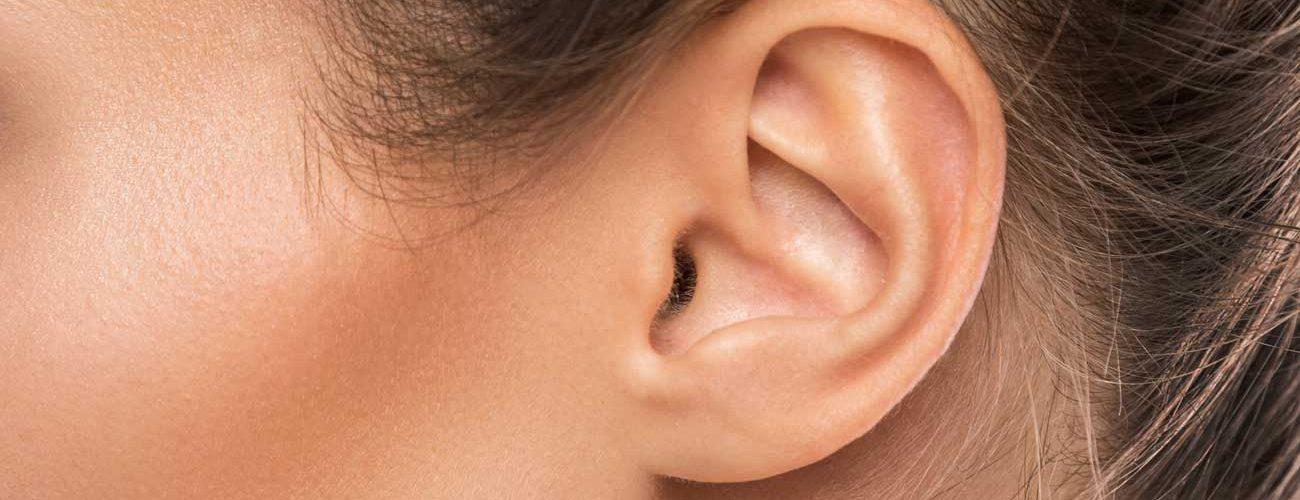 orejas soplillo