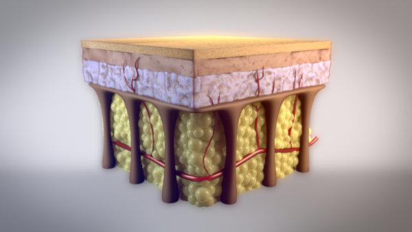 Los septos fibrosos son fibras de colágeno que forman una red tridimensional
